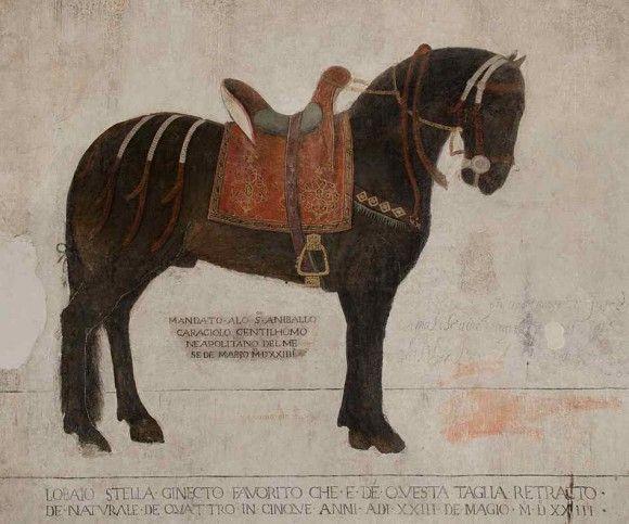 The bay Stella, life-size portrayed in Castello Pandone in Venafro (XV century). 41°29′00″N 14°03′00″E