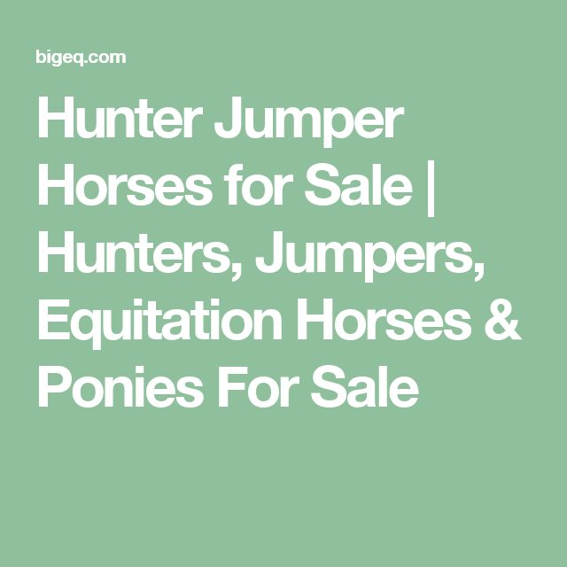 Hunter Jumper Horses for Sale   Hunters, Jumpers, Equitation Horses & Ponies For Sale