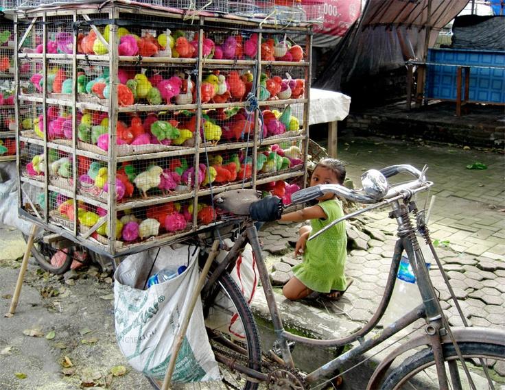 Fiets met kist met geschilderde kuikens. Deze kuikens worden cadeau gegeven aan kinderen. De verf is er na een paar weken van af. Ze zeggen dat de kuikens hier geen hinder van hebben. Batubalan, Bali, Indonesië.