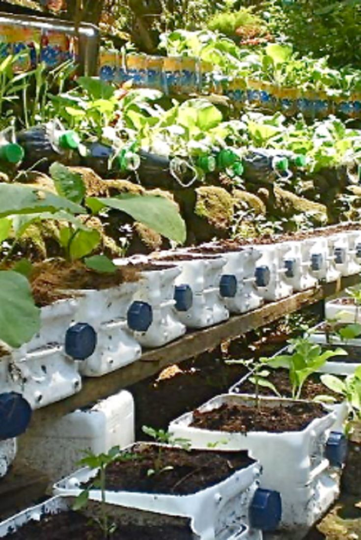 Risers In Container Gardening Video Ideas Amazing