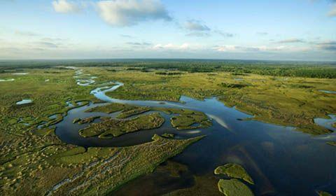 Everglades, tra le paludi della Florida