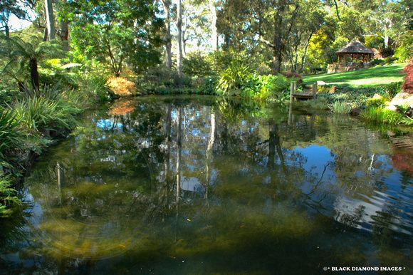 Reflections and Rainforest Grotto,Windyridge Mt Wilson
