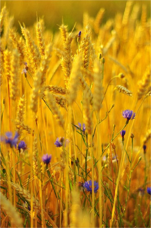 I can just imagine laying in a field of these surrounding me and feeling nothing but totally blissful.