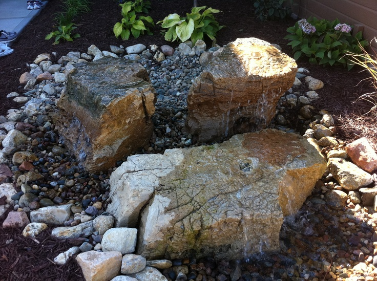Tractor Seat Fuzzy Variegated Plants : Best images about chicken yard ideas on pinterest