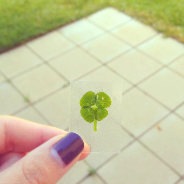 Found a lucky four-leaf clover in the backyard.
