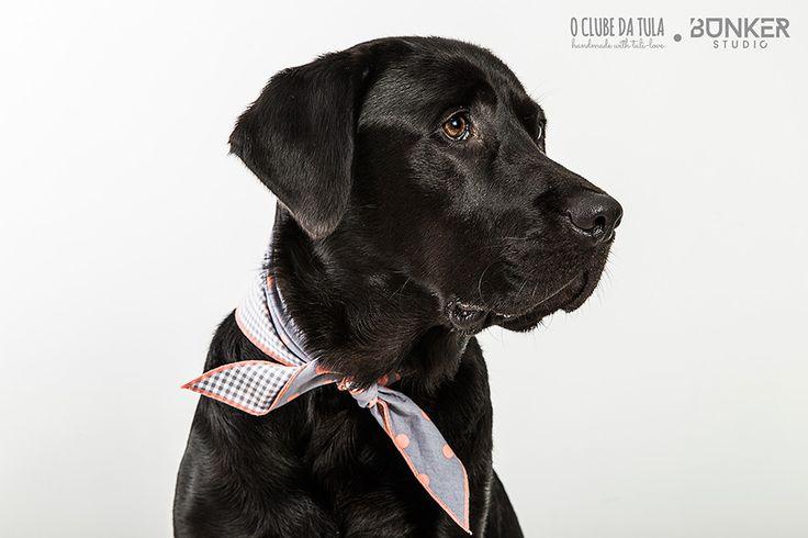 Congo and the Tuli-scarf Civic Dog™ Two Sides Vichy grey/Dots | O Clube da Tula. http://oclubedatula.com/es/produtos/item/tuli-panuelo-two-sides-vichy-grisdots-salmon/