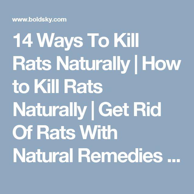 home remedies rat control methods