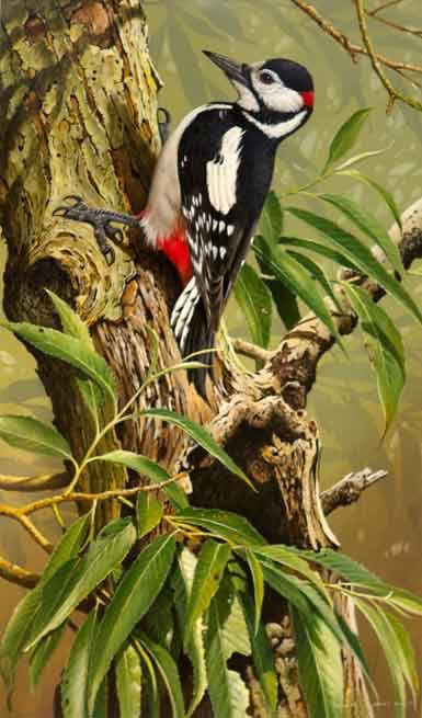 Woodpecker...Terance James Bond
