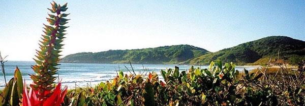 Praia do Rosa - Guia de Viagem - UOL Viagem