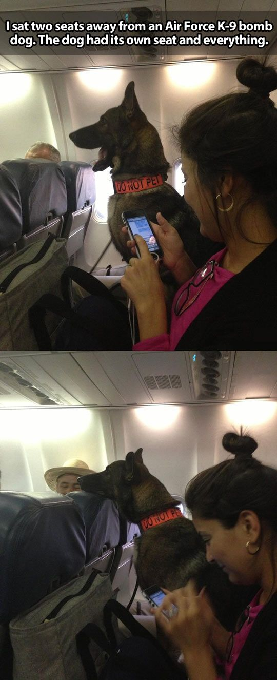 My head would explode if I got to sit next to a dog on an airplane!