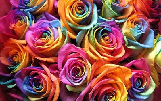 Moldes de flores para imprimir: Colour, Colorful, Wedding, Colors, Rainbows, Rainbow Roses, Things, Flowers, Pretty