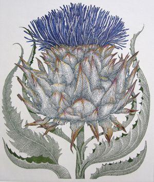 Etchart - Bryan Poole - Botanical Etchings-Cardoon