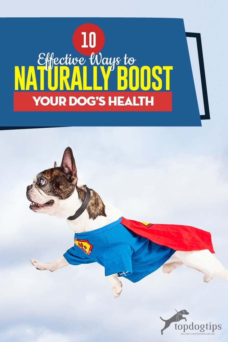 10 Effective Ways To Boost Your Dog S Health Dogs Your Dog