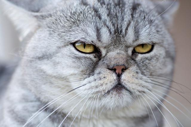 "12 Weird Cat Behaviors Explained: Cat Sneer  ""I'm not so sure I like you."""