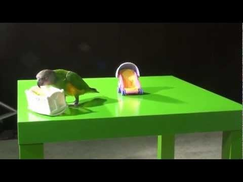 http://www.petcarevision.com/Parrot/order.php