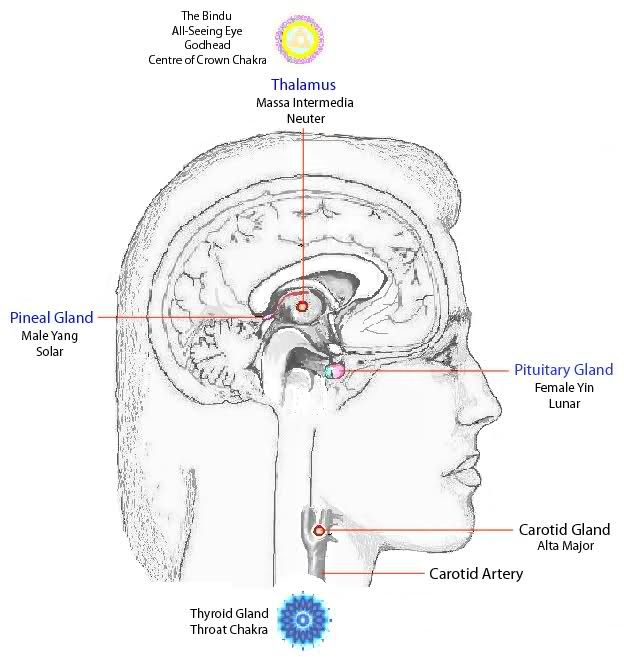 RiseEarth: pineal gland