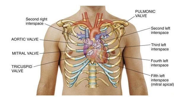 cardiovascular case studies
