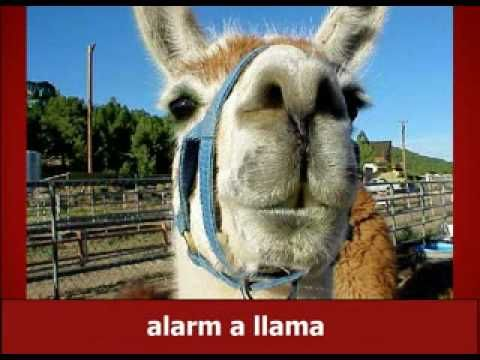 Llama Llama Duck Song... I wouldn't suggest listening to all of if you don't want the song stuck in your head... but it's funny!