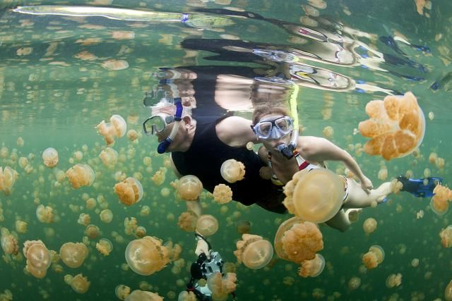 6 Steps to Treat a Jellyfish Sting
