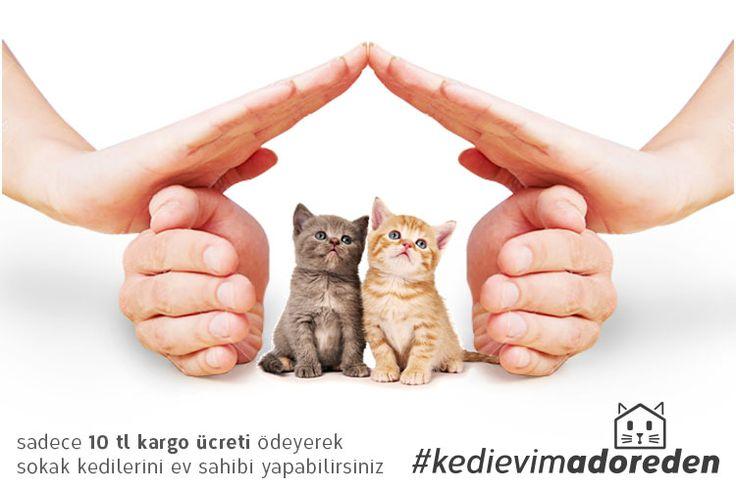 Kedi Evi, 10 TL I Adore Mobilya