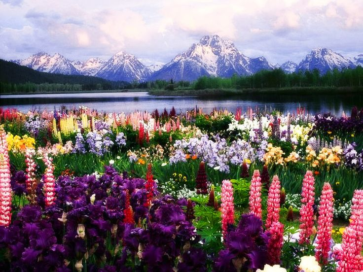 fiori_lago_montagna