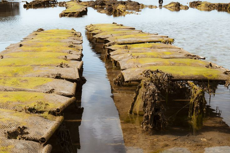 Morbihan, France Fotografie Harmke Paulides