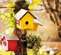 Als kleine bunte Häuschen verteilt im Garten, als schicke weiße Villa passend zum eigenen Heim oder schlicht als Holzbau im Naturparadies hinter dem Haus - der Nistkasten fügt sich wunderbar in den Stil Ihres Gartens ein und bietet Vögeln einen sicheren Platz zum Nisten und Überwintern. So einfach kann Naturschutz sein! http://www.fuersie.de/diy/garten/artikel/anleitung-und-tipps-nistkasten-selber-bauen