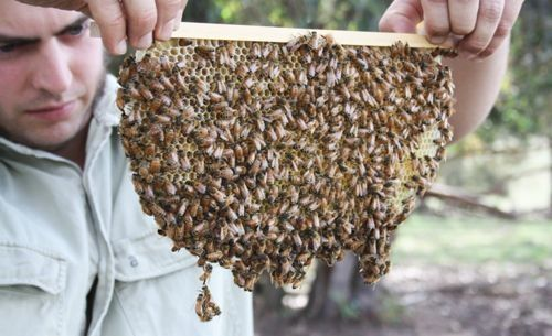 The Way of the Bee: an Intro to Natural Beekeeping