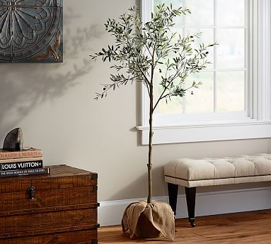 Potted Olive Tree #potterybarn