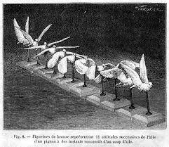 Image result for etienne ferry bird