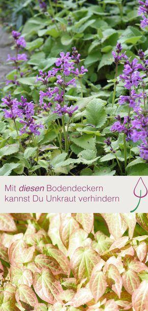 Lovely Mit Bodendeckern Unkraut im Garten verhindern statt entfernen