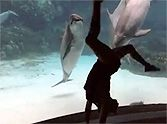 Silly Girl Entertains a Curious Dolphin... with Acrobatics! :) ~ it looks as if the dolphin is laughing and so enjoying her antics..... wonderful short video clip!!