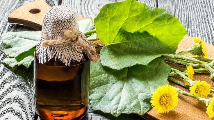 Domácí bylinkové sirupy proti kašli