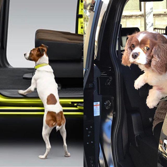 新車が納車。 カタログのように… とはうまくいかず何故か不安顔に。 病院にはいかないよー😅 #愛車 #新車 #シエンタ #トヨタ #愛犬 #キャバリア #キャバリアキングチャールズスパニエル #cavalier