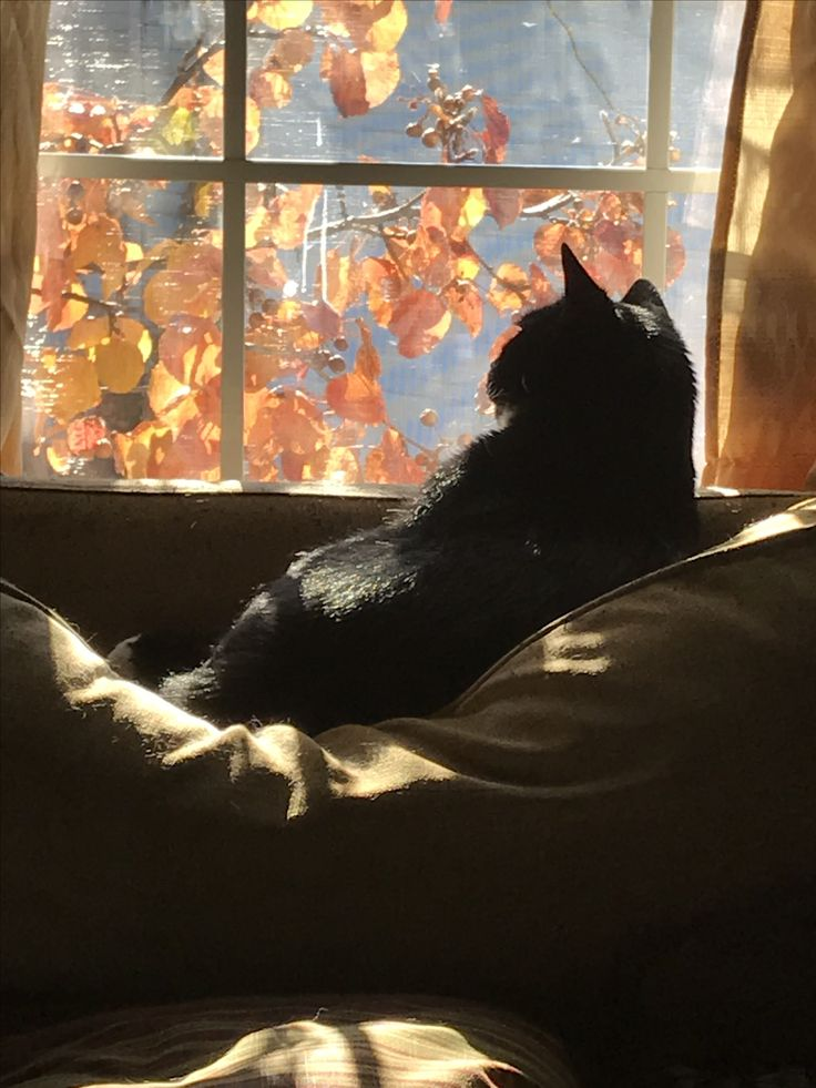 This kitty likes watching the leaves fall from inside its home in its very comfy spot!'