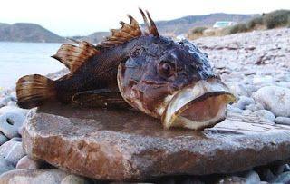 Все для рыбалки. удилище с поплавком, спиннинг, снасти для ...