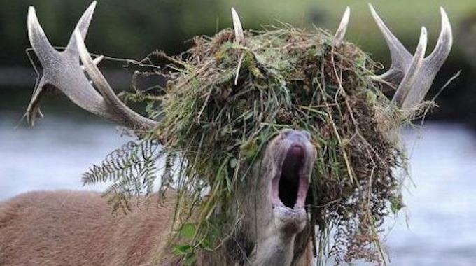 Des mauvaises herbes se sont installées dans l'allée du jardin ? Maintenant vous ne rêvez que d'une chose : les supprimer, les éliminer, les éradiquer, voire... les tuer au lance-flamme