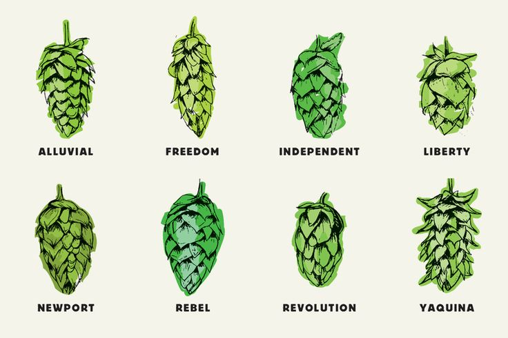 The Hop Review – Beer Interviews, Photography & Travel. – Beer & Branding: Rogue Ales Hop Family
