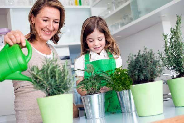 Овощи и зелень, которые можно выращивать на подоконнике