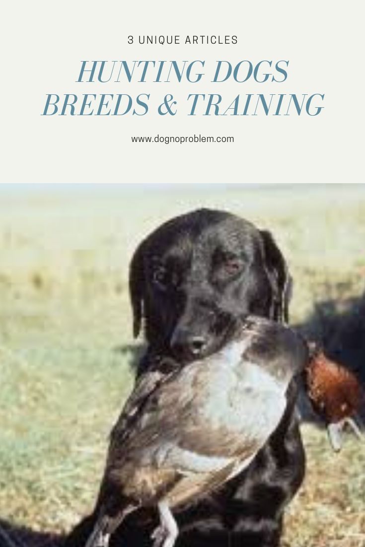 Hunting Dogs Breeds Training 3 Unique Articles Great Reading