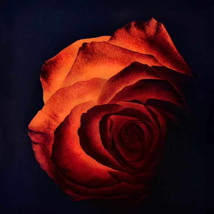 Glowing Rose (working title) by deRaat
