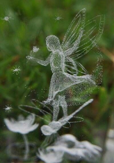 The garden fairies come at dawn, bless the flowers and then they're gone.