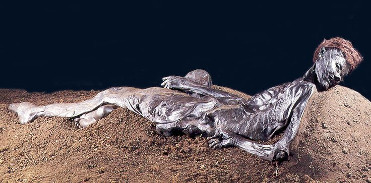 Grauballe Man - a bog mummy dating from around 55 BC - was found in 1952 near Grauballe, Denmark by a team of peat diggers. The adult male was most likely killed by having his throat slit open from ear to ear. There were no artifacts or any evidence of cloathing, indicating that when he died he was entirely naked. Grauballe Man is one of the most exeptionally preserved bog bodies ever to be recorded and is on permanent display at the Moesgaard Museum near Aarhus.