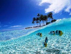 Bunaken Island, Indonesa