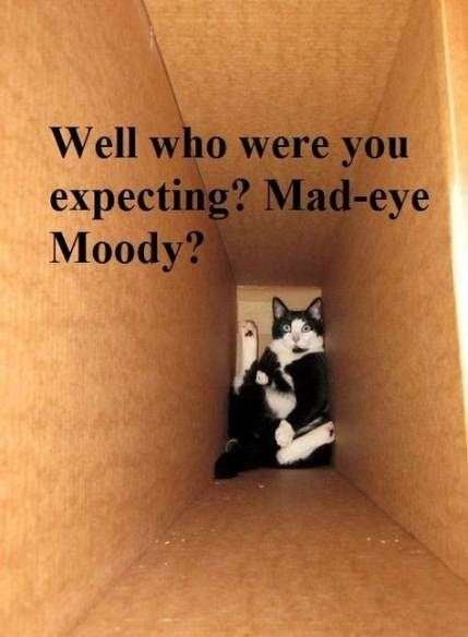 Trendy cats funny laughing so hard harry potter Ideas – Funny & Delightful