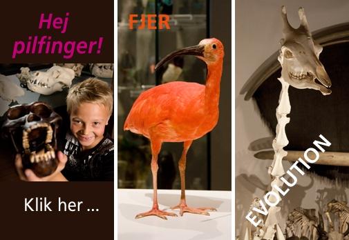 Zoologisk Museums udstillinger