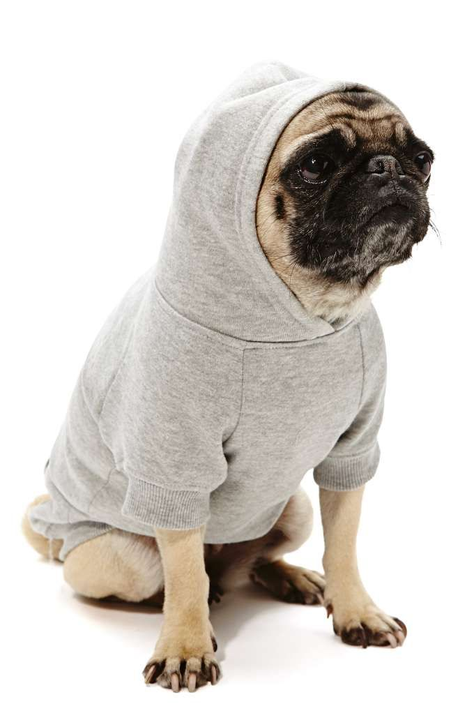 17 Best images about PUGS on Pinterest | Kinds of dogs