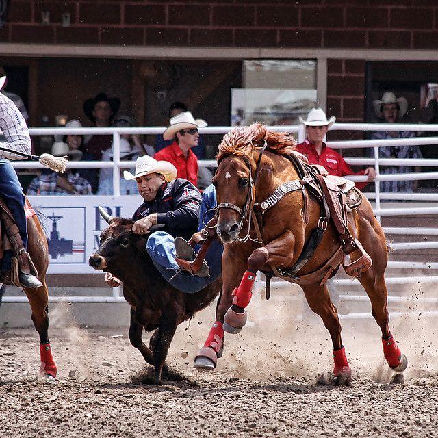 17 Best Images About Farm Amp Ranch On Pinterest Horse