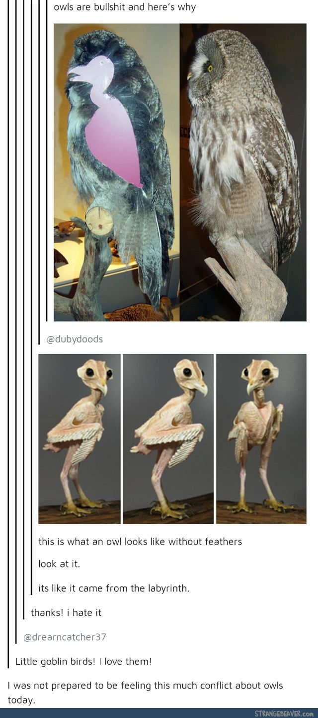 Oh one time I saw a small figure of what a certain owl would look like without feathers and I kid you not it looked like E.T.