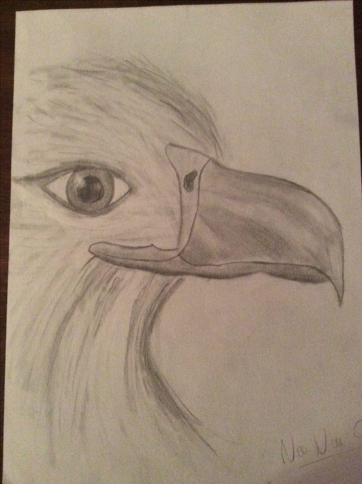 Dessin aigle